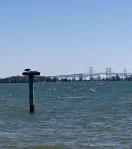 Bird in nest in water, Chesapeake Bay Bridge in background